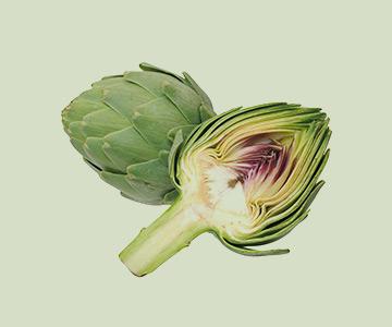 گیاه آرتیشو
